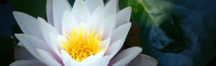 Soin – fleur de lotus
