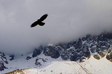 aigle survolant les montagnes